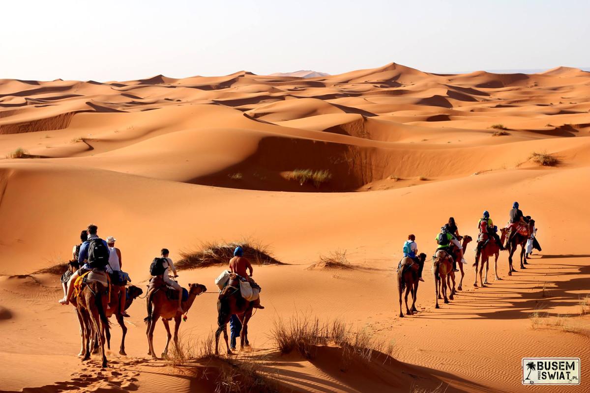 Z karawaną wielbłądów na Saharaze