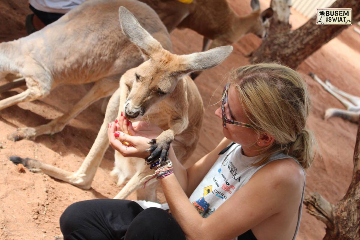 W sierocińcu dla kangurów, Australia