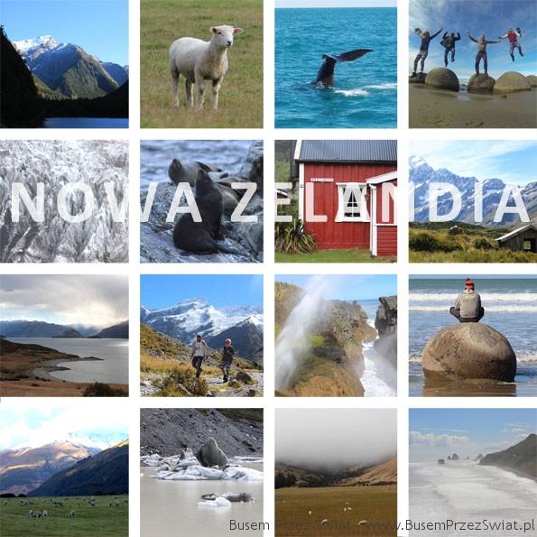 miniatura galeria niwa zelandia