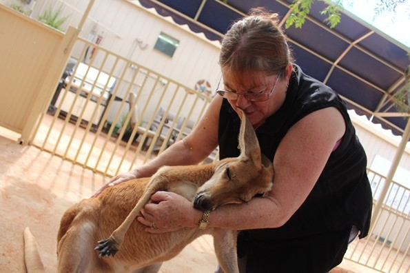 sierociniec kangury australia