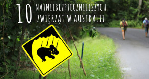 australia zwierzeta miniatura