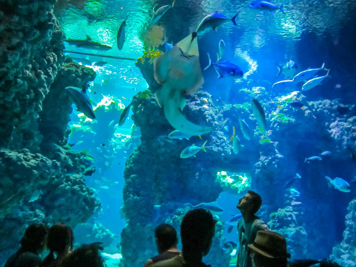 Musée Océanographique de Monaco Monako muzeum oceanograficzne