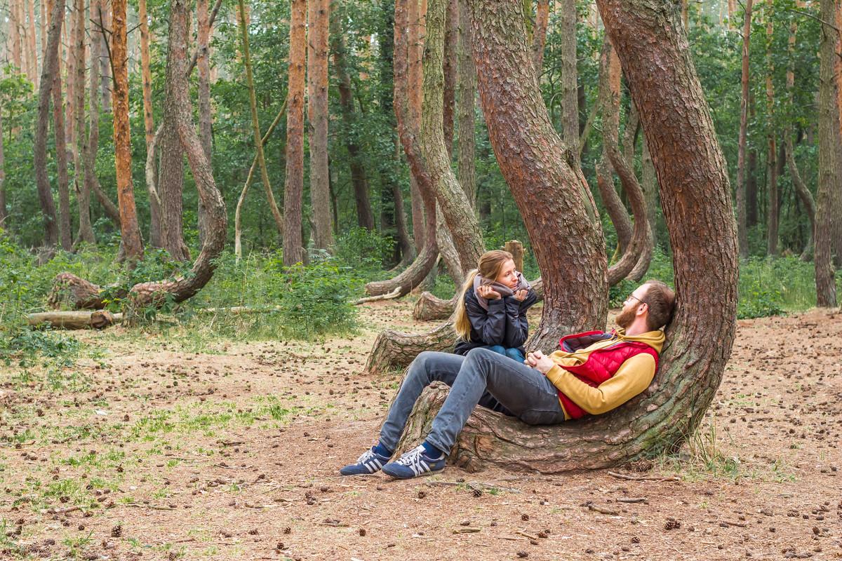 Krzywy las szczecin gryfino polska