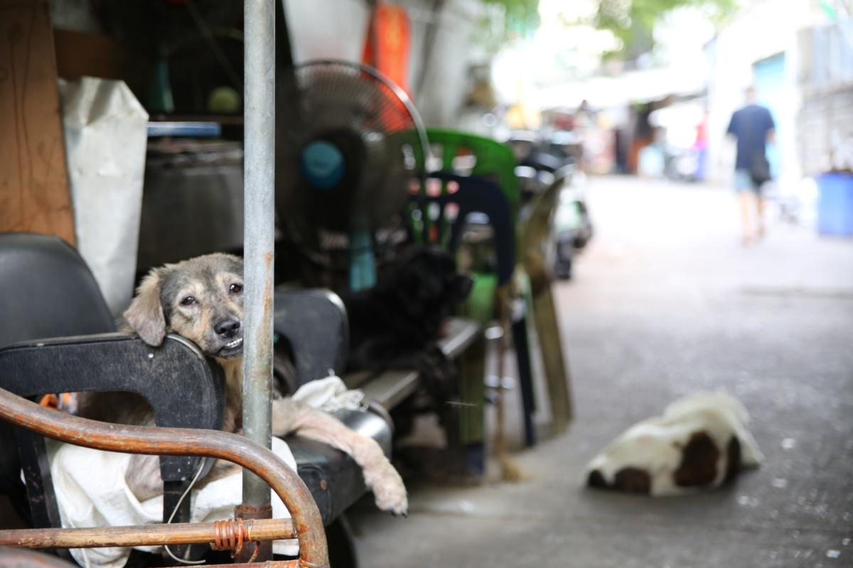 tajlandia psy