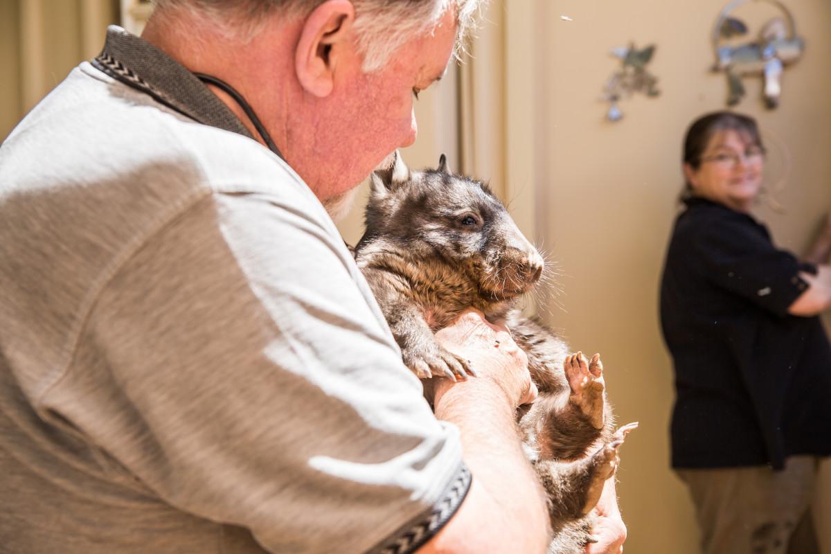 sierociniec dla kangurów coober pedy australia wombat
