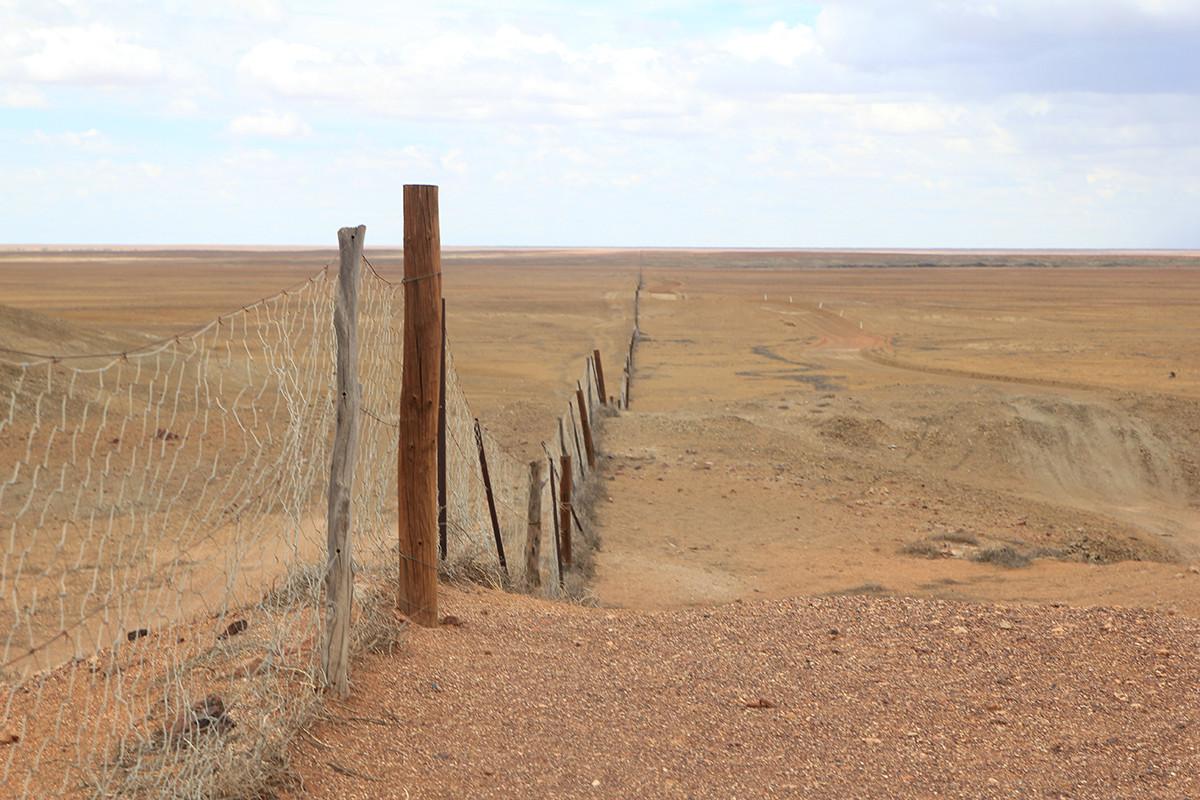 Dog Fence Dingo Fence płot